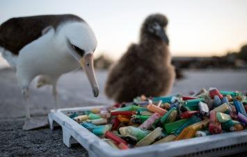 island-plastic-social